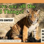 NOW CLOSED: Where are all the Wild Things? Photo Contest